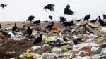 Aviones en peligro por aumento de gallinazos - Noticias de excremento de ave