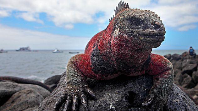 1535, año del descubrimiento de Galápagos. Ocurrió durante un viaje del español Tomás de Berlanga. (D. Vexelman)