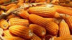 Nascas comían pop corn - Noticias de mazorca