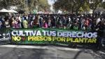 Miles piden legalización de marihuana - Noticias de cercado de lima