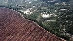 Google ayudará a combatir la deforestación en América Latina - Noticias de rebecca moore