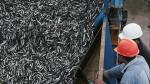 Se reducirá la pesca de anchoveta hasta enero próximo - Noticias de centro juvenil