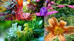Flores exóticas, un negocio próspero - Noticias de promperú